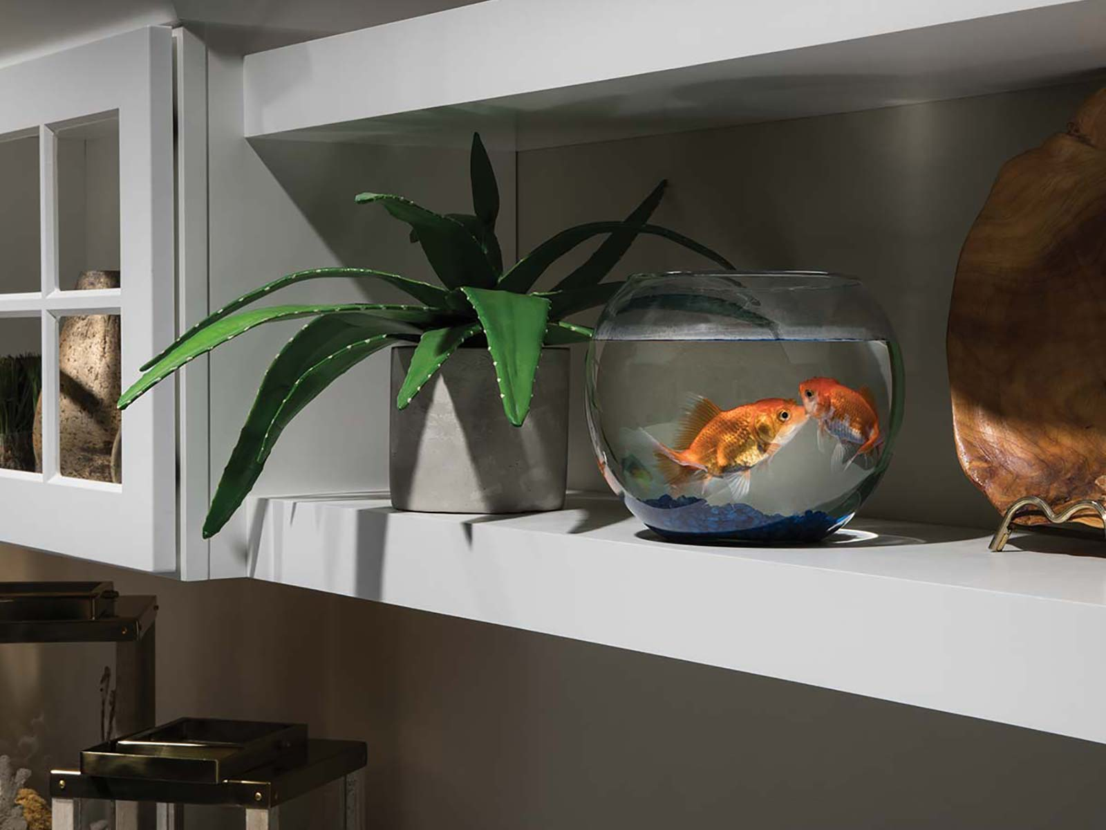 Floating Shelf with Gold Fish